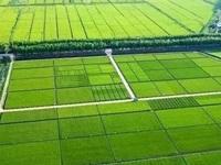 伊川县农业农村局葛寨镇1.4万亩高标准农田建设项目