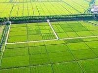 虞城县2019年高标准农田建设项目第四标段(二次)延期 77.6万